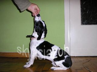 εκπαίδευση σκύλων κάτσε 3