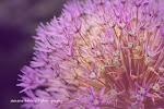 Mein Foto-Blog