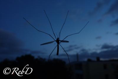 siluett av harkrank på fönster mot bakgrund av nattlandskap. foto: Reb Dutius