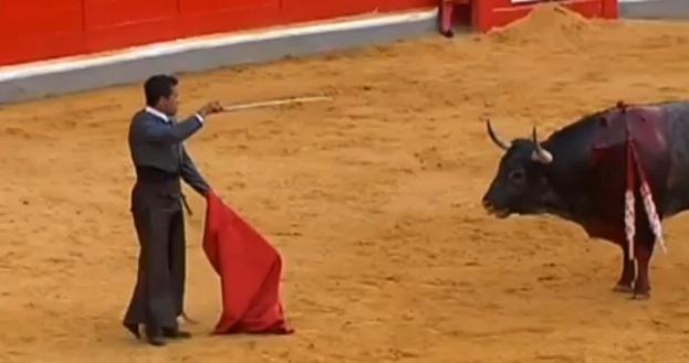 toureiro levando chifrada
