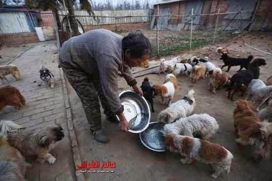 الكلاب الضالة، تربية الكلاب