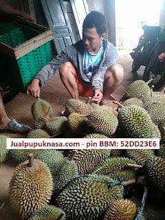 Panen durian milikku, Desa Kalirejo, Kec. Singorojo, Kendal, Jawa Tengah