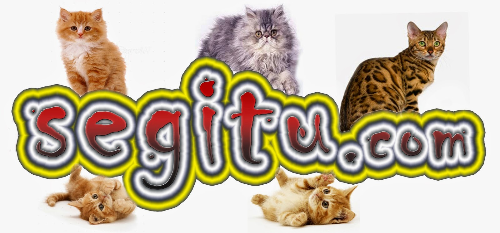 Cara Memotong Kuku Kucing Yang Galak Kucing Persia