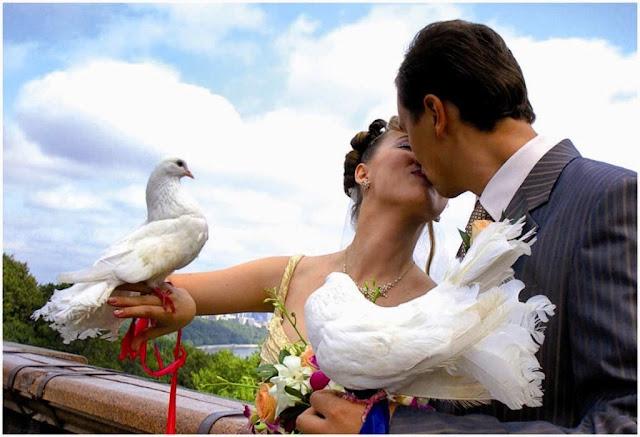 жених и невеста и белые голуби
