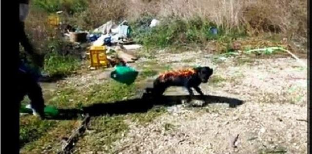 Δύο Ρομά έκαψαν ζωντανό ένα σκύλο στην Άρτα!!!