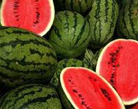 Manfaat buah semangka,manfaat buah tomat,manfaat buah alpukat,manfaat buah pepaya,manfaat buah pisang,manfaat buah melon,manfaat buah mangga,manfaat buah rambutan,tanam semangka,semangka untuk ibu hamil,kulit semangka,klasifikasi semangka,kandungan semangka,khasiat semangka,semangka kotak,manfaat buah apel,budidaya tanaman semangka