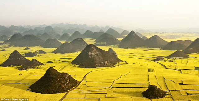 Pemandangan Lautan Bunga Kuning Di China [ www.BlogApaAja.com ]