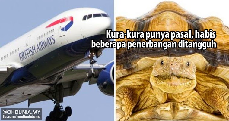 Kura-kura punya pasal, beberapa jadual penerbangan terpaksa ditangguh