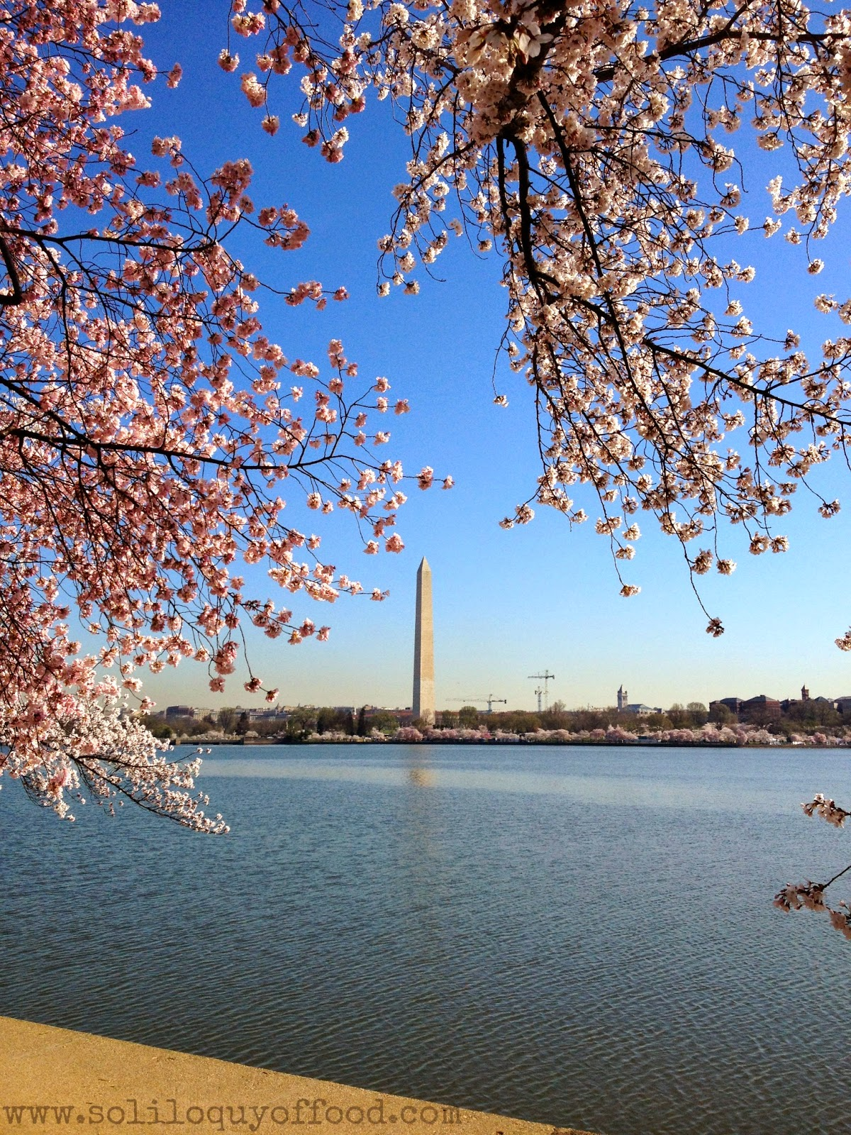 The Washington Monument from across the Tidal Basin - Cherry Blossoms 2014, Washington, DC - www.soliloquyoffood.com