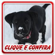 Clique ou fique Louco de Curiosidade - 2