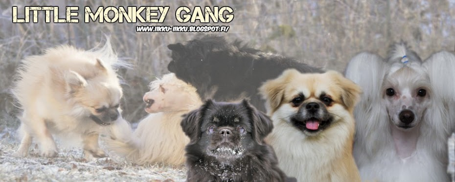 Little monkey gang