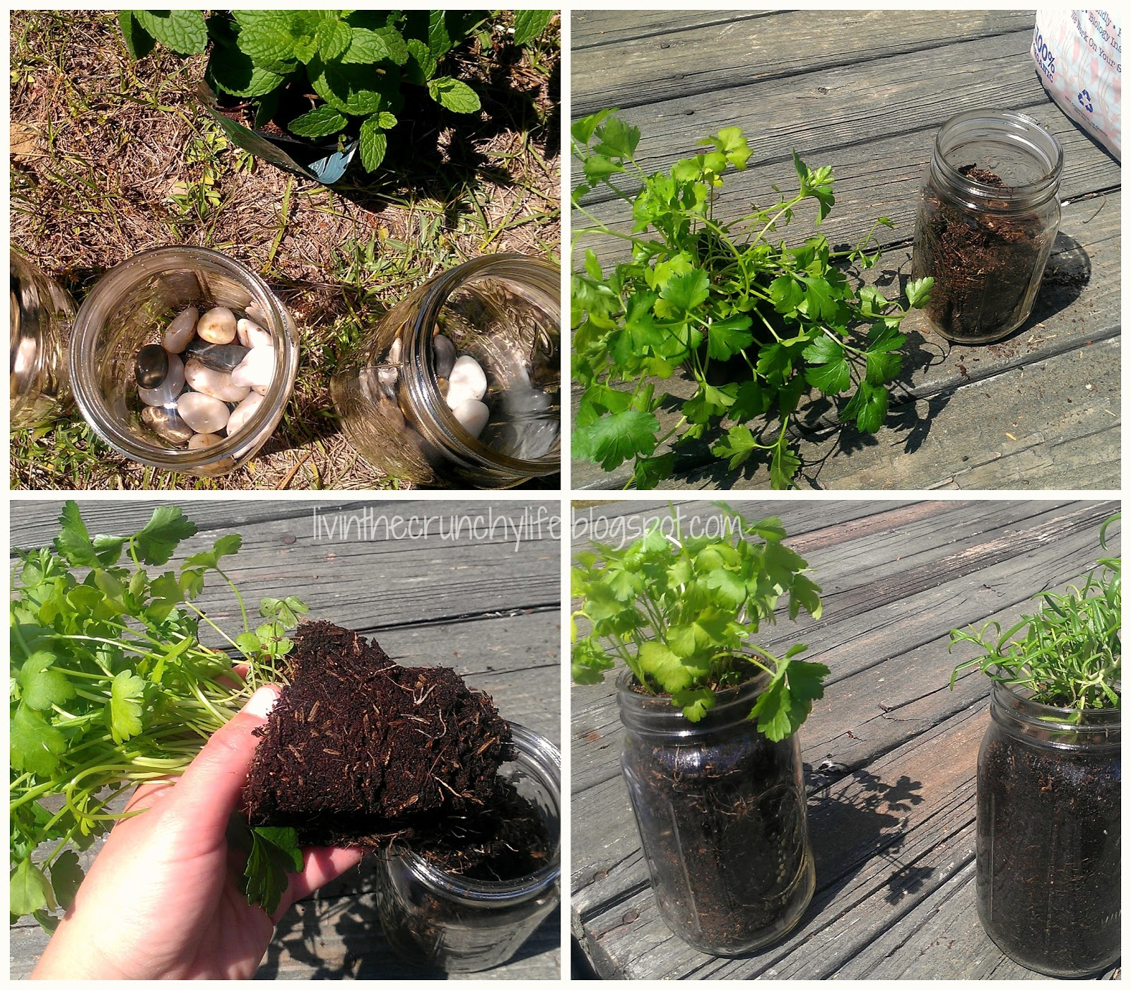 how to grow herbs in mason jars  livin' the crunchy life, Beautiful flower