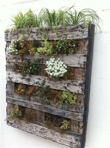 jardin vertical de palés