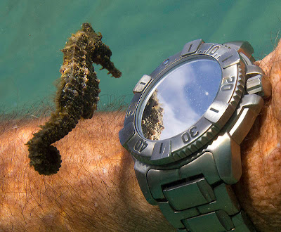 Seahorse - small and romantic