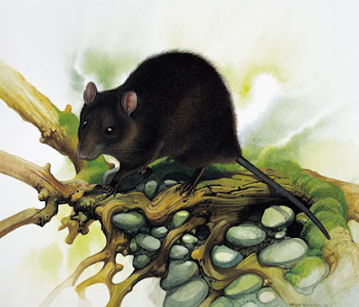 extinct islands mammals