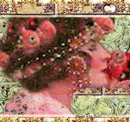 Pearls of Rose- new