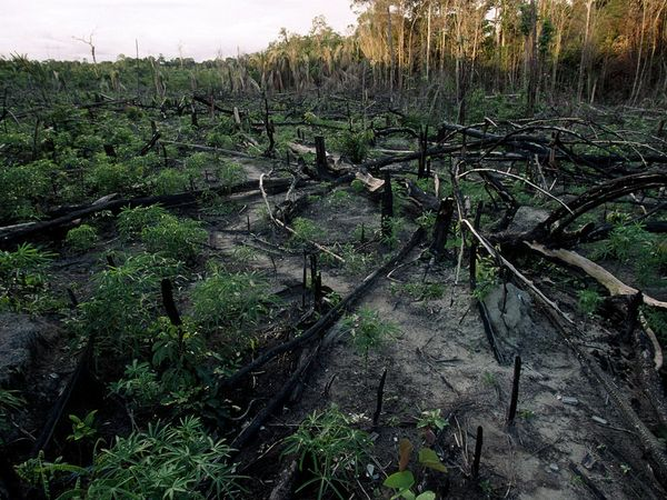 Essay about deforestation causes