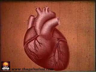 Heart حقائق مذهلة عن جسم الإنسان