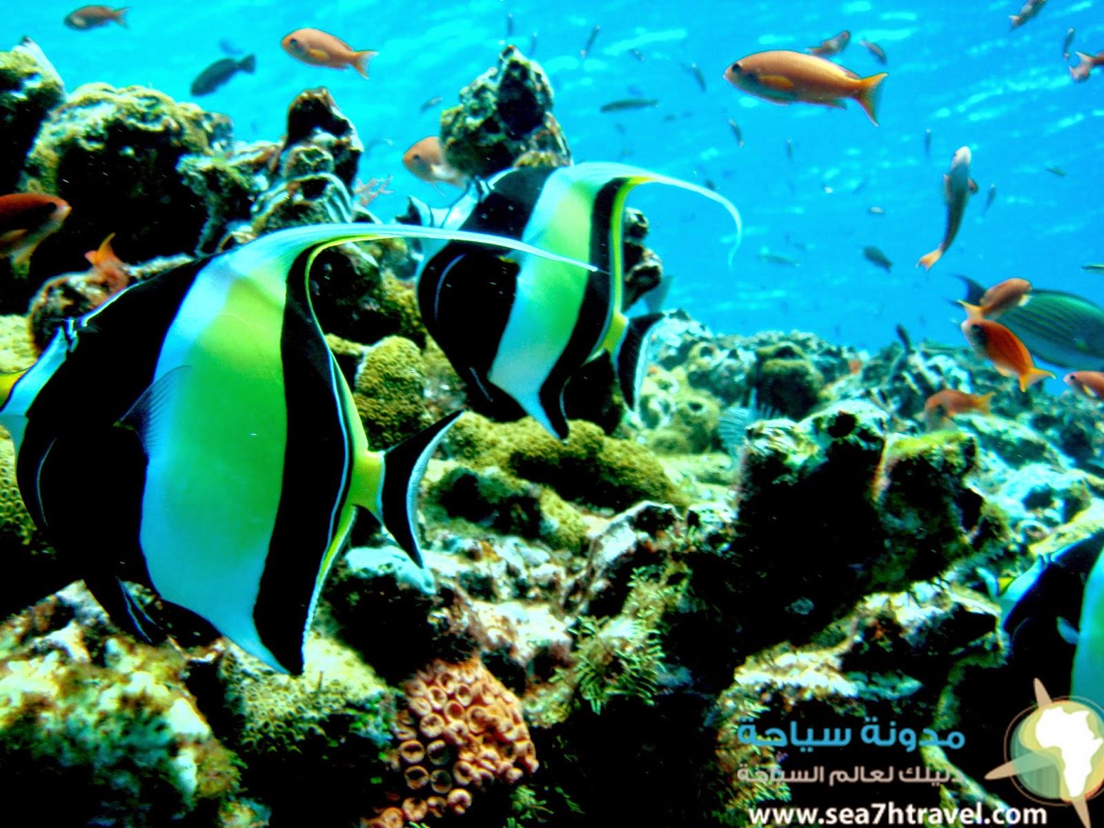 جزيرة مانتا بوينت بجزر المالديف Manta Point