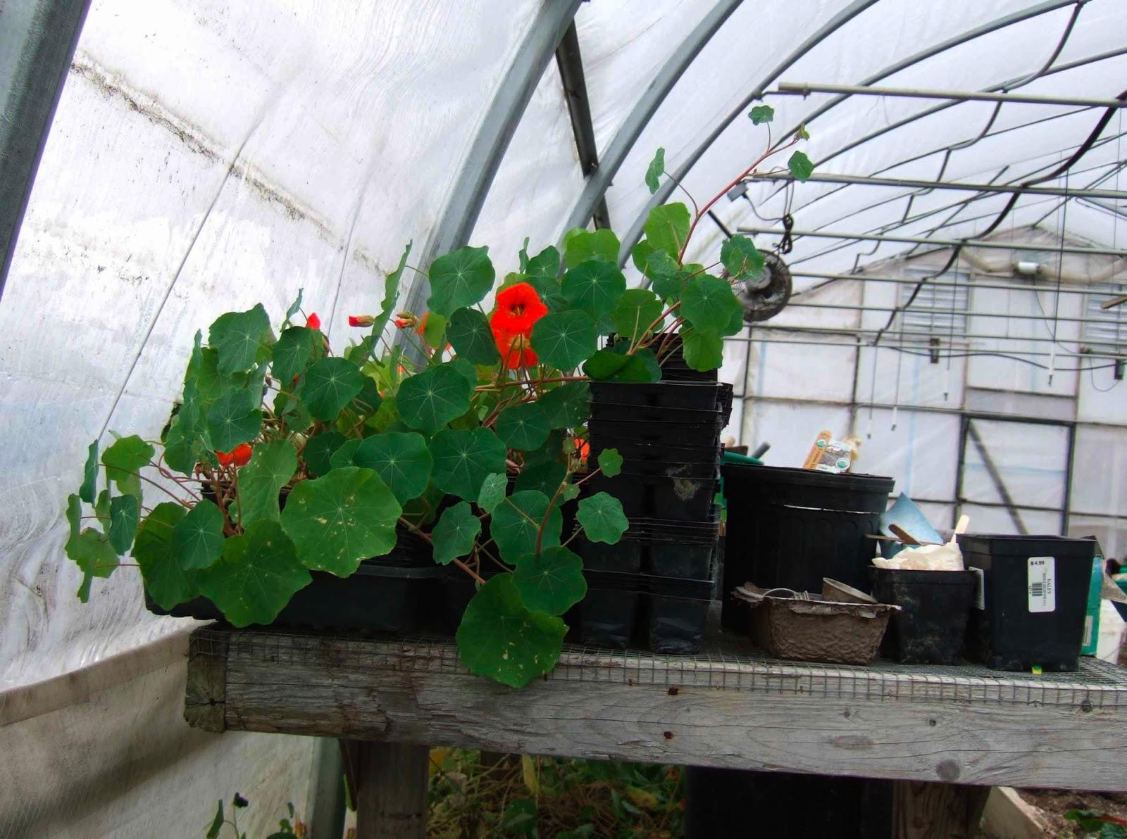 helping gardeners grow gardening in winter