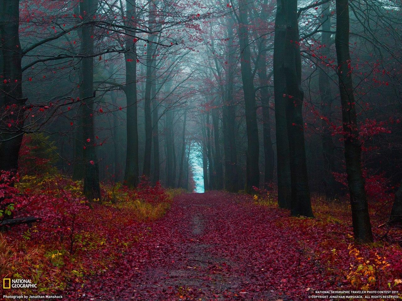 Прохожую в лесу 24 фотография