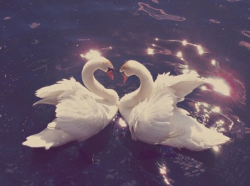 ducks in water - peace, love and beauty