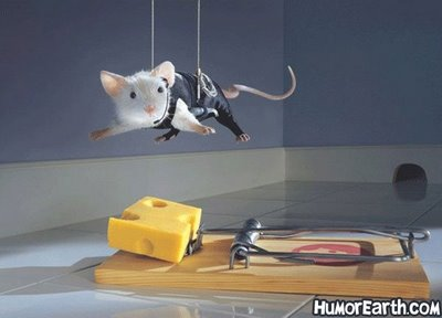 Funny Mouse Pictures Free