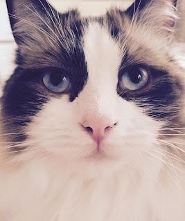 Jual Kucing Jantan 2 Bulan Pekalongan, kucing persia betina,  kucing persia besar,  kucing persia baru lahir,  kucing persia bogor,  kucing persia batam,  kucing persia bersin,  kucing persia belekan,  kucing persia birahi,  kucing persia calico,  kucing persia cantik,  kucing persia campuran kucing kampung,  kucing persia campuran,  kucing persia calico jantan,  kucing persia cacingan,  kucing persia campur kampung,  kucing persia campur anggora,  kucing persia calico adalah,  kucing persia campuran anggora,  kucing persia dijual,  kucing persia dijual murah,  kucing persia depok,  kucing persia diare,  kucing persia diberi makan nasi,