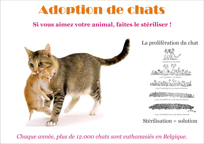 Adoption de chats
