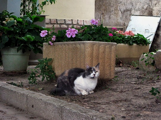 Cat from La Redorte, France