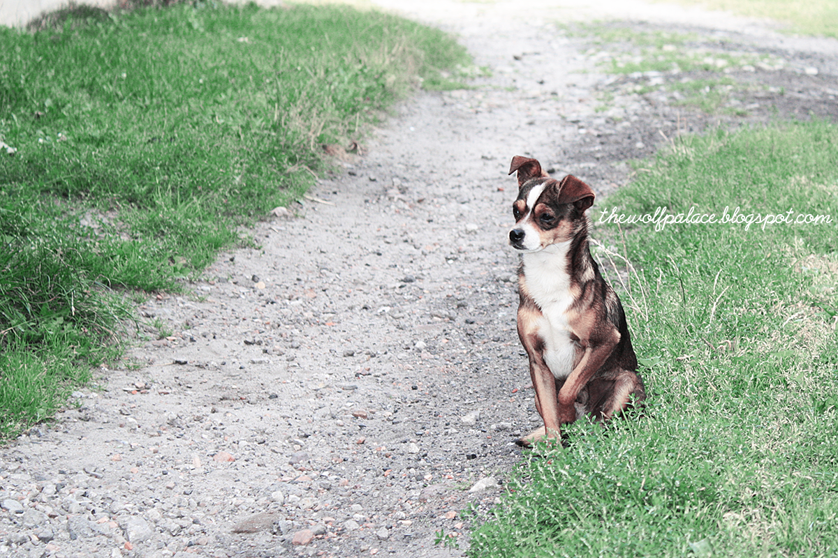 pies | piesek | mały piesek | dog | small dog