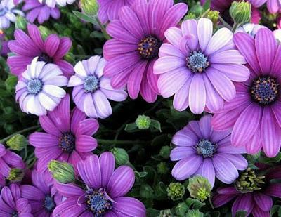 Bunga-Bunga Yang Cantik Dan Indah