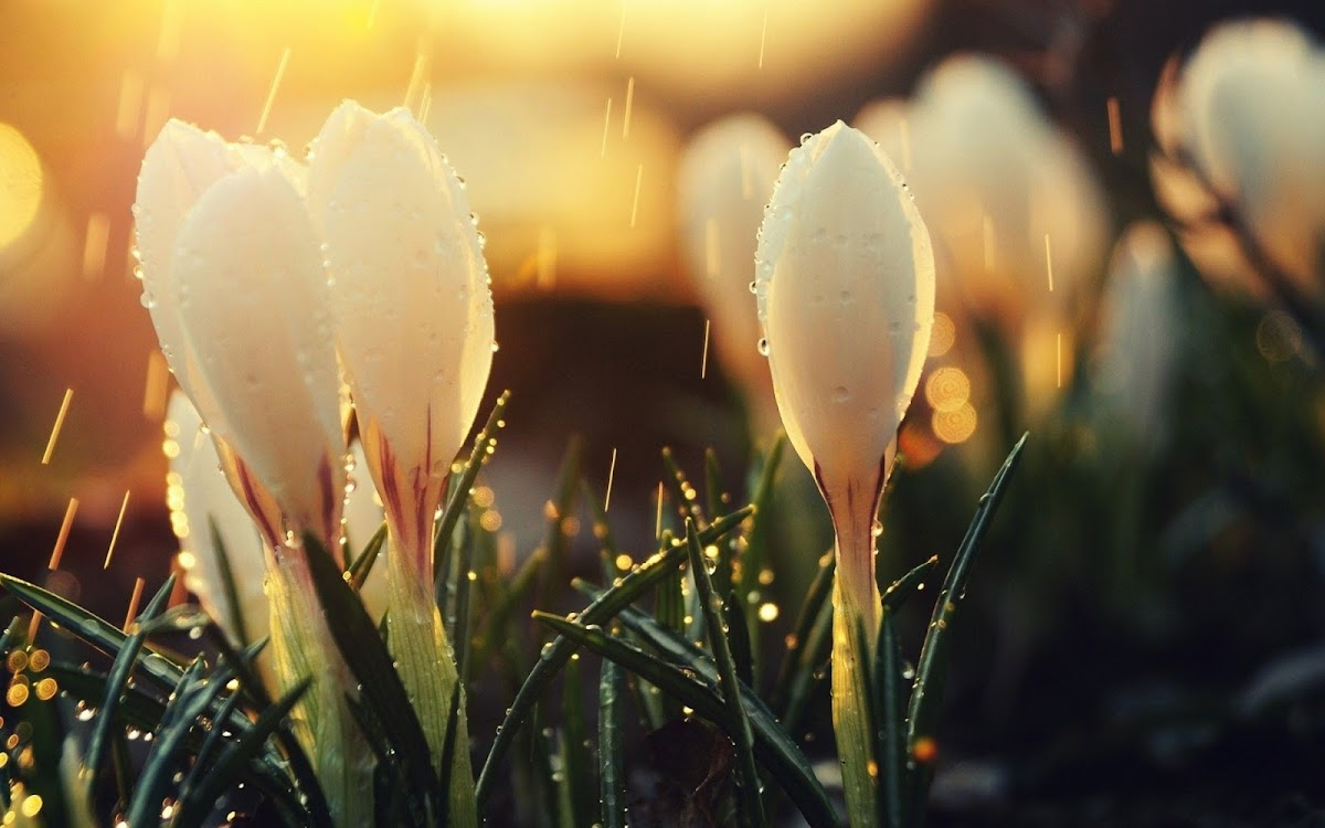White Flowers Widescreen HD Wallpaper 8