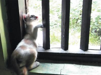 Foto-Foto Anak Kucing Lucu di Luar Jendela Kamar Kost Gue 09