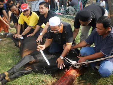 Perkhidmatan menyembelih lembu & kambing (korban dan aqiqah)