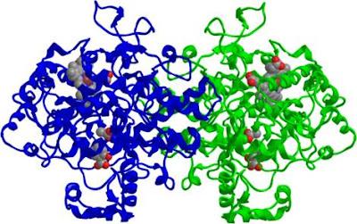 inhibición COX-2 por la aspirina ácido acetilsalicílico