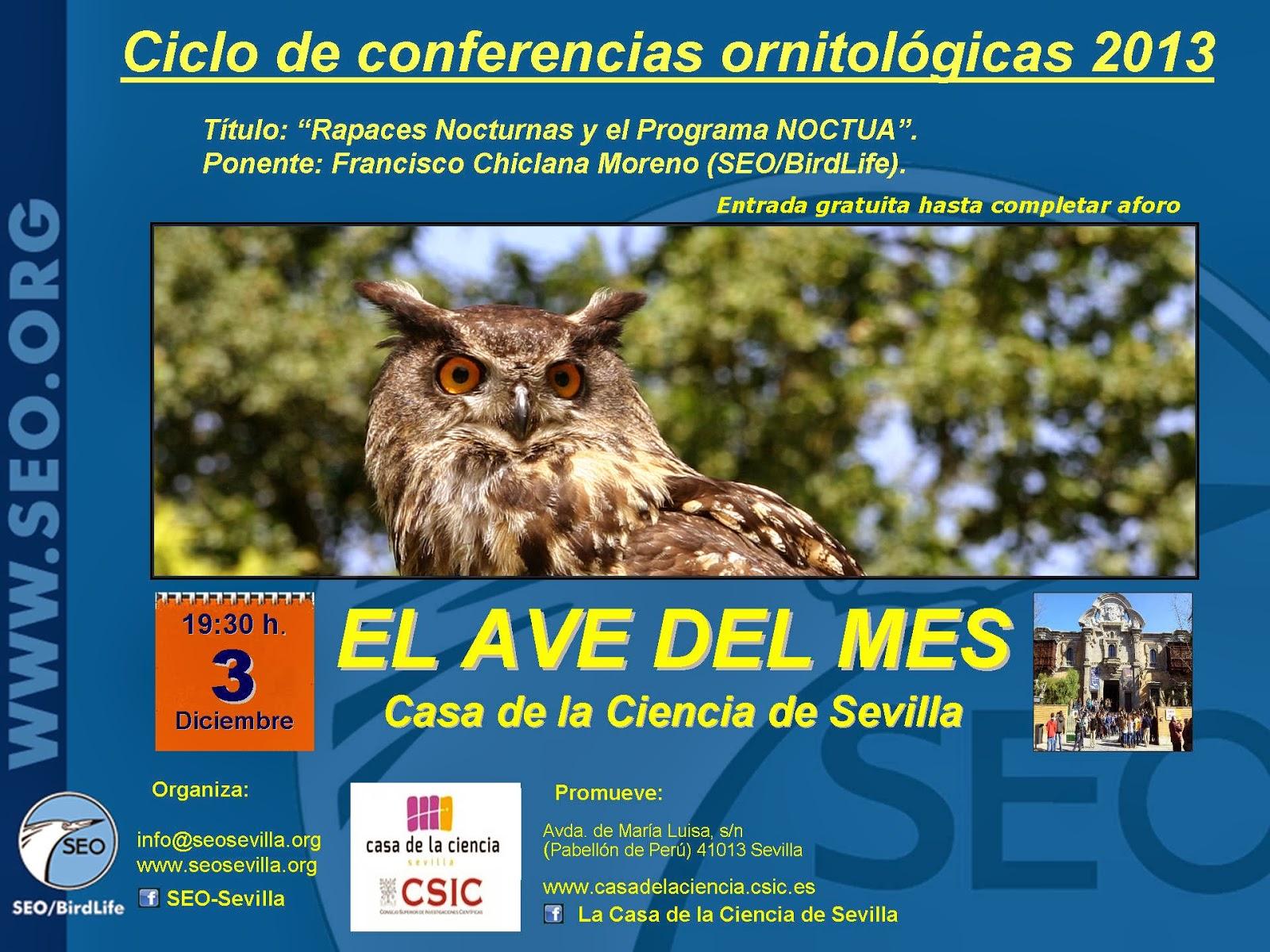 El Ave del Mes de Diciembre 2013 SEO-Sevilla