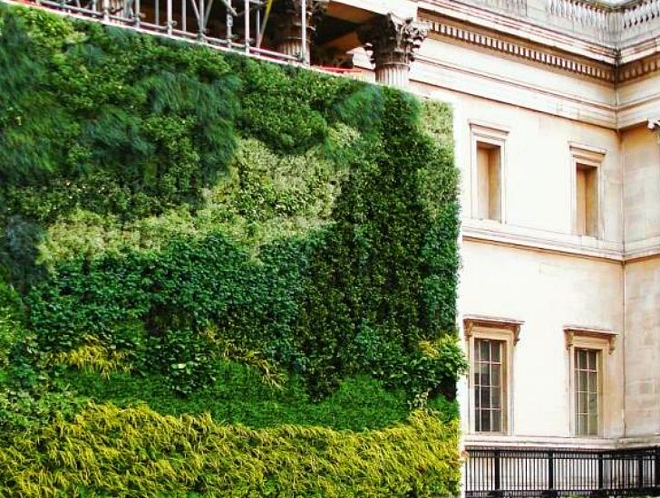 Mi pared verde - Paredes en verde ...