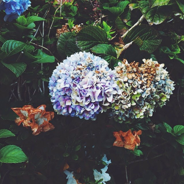 vscocam, instagram social media tips, blogging tips, los angeles pretty nature in fall colors, fall flower