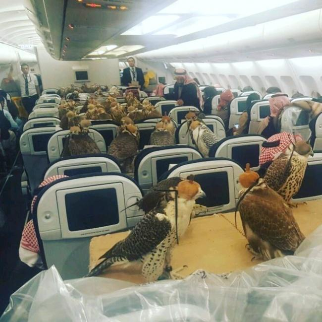 Nothing unusual, just the prince of Saudi Arabia bought 80 seats in the plane for his hawks