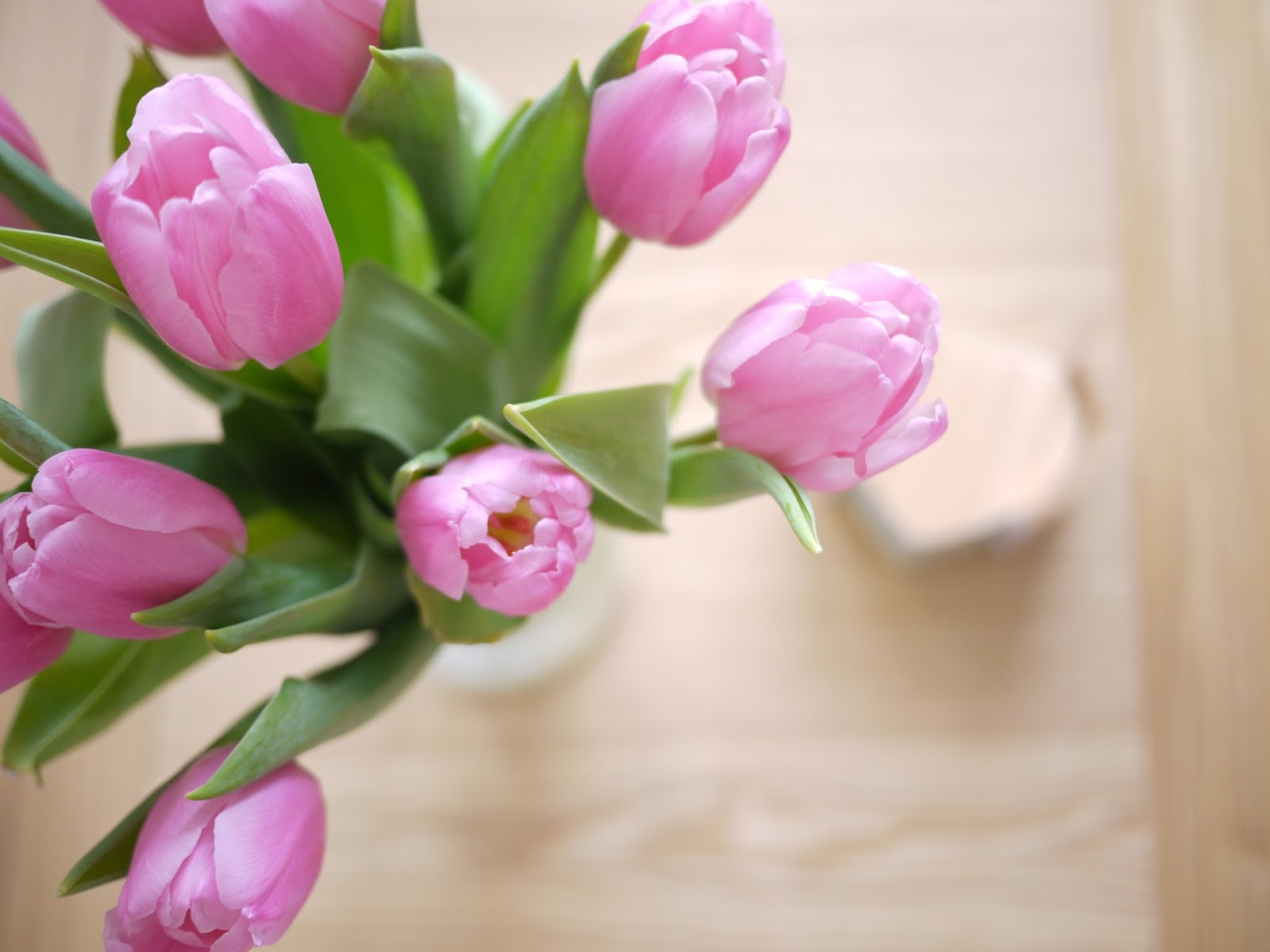 A picture of tulips at springtime