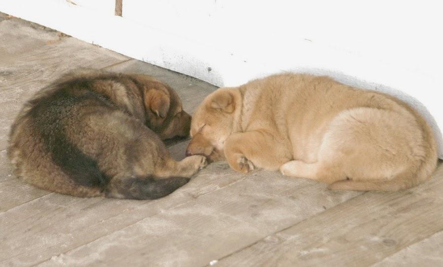 Фото Виталия Бабенко:бездомные щенки