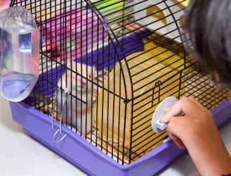 perlengkapan hamster