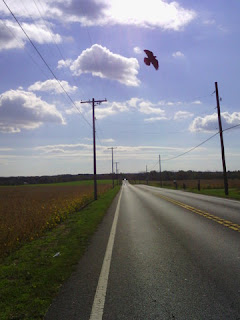 Bird flies overhead after I pass on a long straight road in Maryland. (Narrative Clip photo)