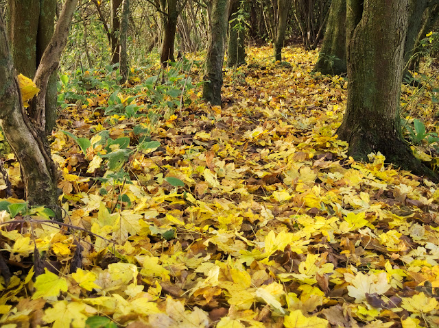 Path in the woods carpeted in yellow leaves