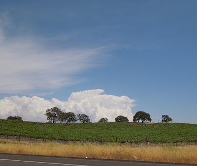 Clouds, Oaks, Vineyard, on Hwy 46 W, Paso Robles, © B. Radisavljevic