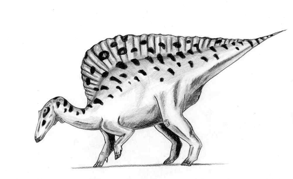 Extinct Animal Of The Week February 2012