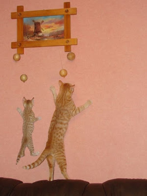 Cats Seen On www.coolpicturegallery.us