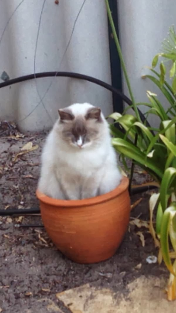 Funny cats - part 87 (40 pics + 10 gifs), cat sits on plant pot