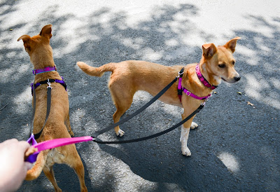 Zoephee Freedom Harness Review